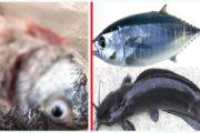 সুস্থ থাকতে যে মাছগুলো আপনার খাওয়া একদম উচিৎ নয়
